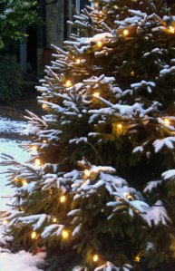 White snow covered Christmas Tree © Photo Original Minnie