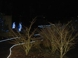 Penguin lights at a Winter Wonderland walk